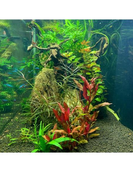 For Freshwater aquariums and ponds